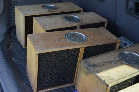 Packaged Bees En Route